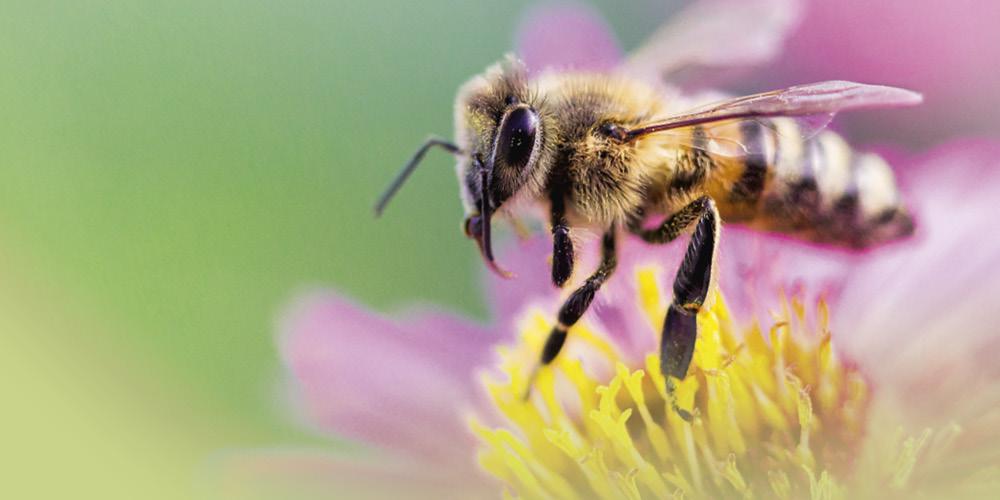 VITALIA Blog Banner Rettet die Bienen