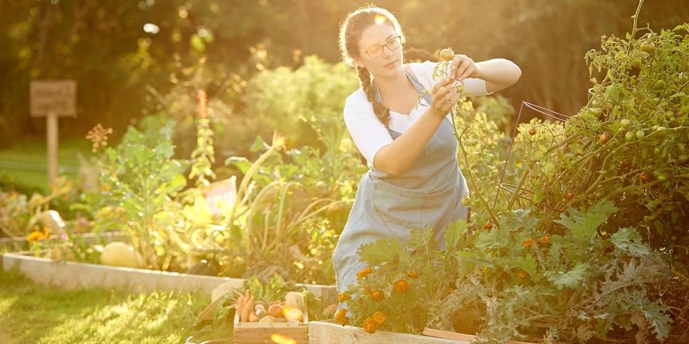 VITALIA Blog Text Bienen Garten
