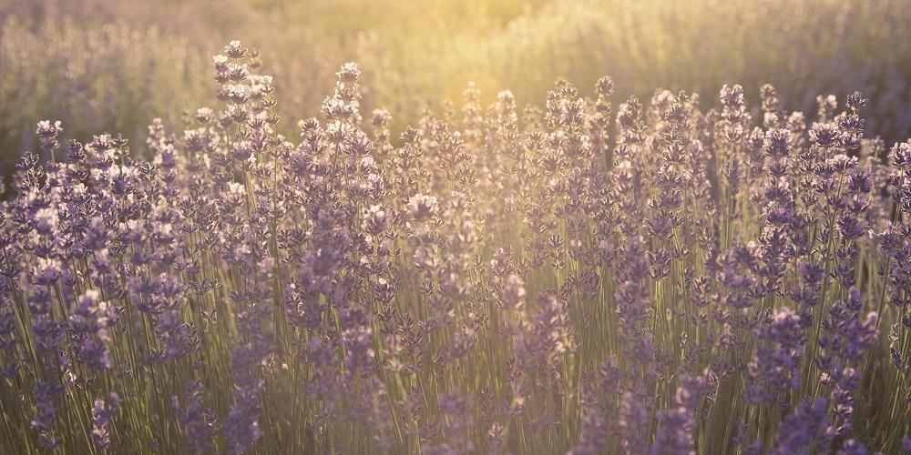 VITALIA Blog Text Bienenfreundlicher Garten